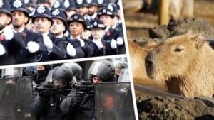 カピバラを軸に、世界の警察を語る。前編バナー