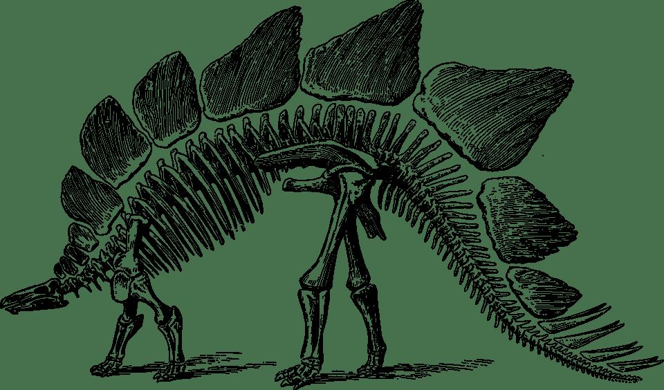 化石の時代を映し出す古生物学 〜生態学〜